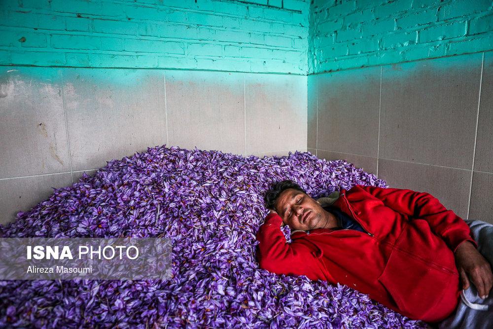 3 - گل زعفران - خرید و فروش