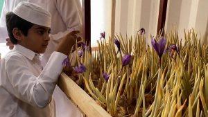 رعفران در قطر